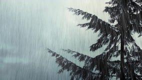 树在风和雨中摇摆 股票录像