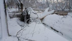 树在飓风以后落 穿过城市被清扫的飓风 树呕吐与根 灾害 免版税库存图片