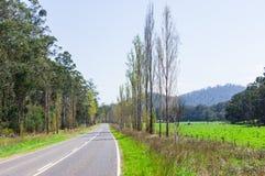 树在马里斯维尔,澳大利亚附近排行了乡下公路 免版税图库摄影