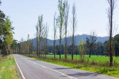 树在马里斯维尔,澳大利亚附近排行了乡下公路 免版税库存图片