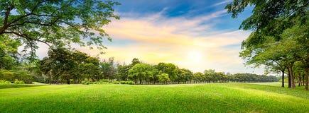 树在高尔夫球场 库存照片