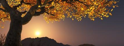 树在黄昏的秋天 皇族释放例证