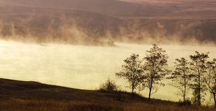 树在黎明在清早 库存图片