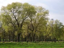树在更低的莱茵河地区的春天 库存图片