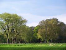 树在更低的莱茵河地区的春天 免版税库存图片
