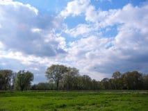 树在更低的莱茵河地区的春天 免版税库存照片