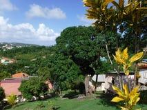 树在巴巴多斯 免版税库存图片