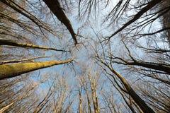 树在从底部的冬天 免版税库存照片