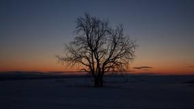 树在黎明 免版税库存图片