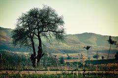 树在11月 库存照片