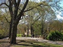 树在Arrayanes公园 巴里洛切阿根廷 免版税库存图片