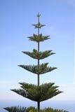 树在Canton de Beausoleil 法国 免版税库存图片