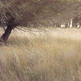 树在Doñana自然公园。 免版税库存照片