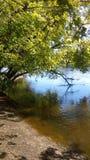 树在Fridley,明尼苏达临近湖密西西比 免版税库存图片