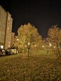 树在klaipeda的晚上 免版税库存照片