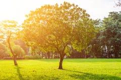 树在Lumpini公园,曼谷 图库摄影