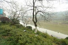 树在rainin植物园里 免版税库存图片