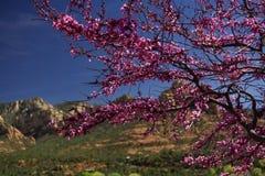 树在Sedona,亚利桑那 库存图片