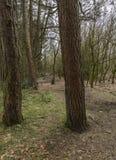 树在Tandle小山国家公园的冬天 免版税库存图片