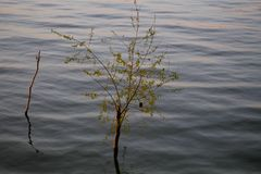 树坐水 图库摄影
