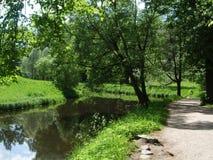树垂悬在湖的Pavlovsk 图库摄影