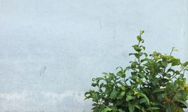 树墙壁背景的前面 库存照片