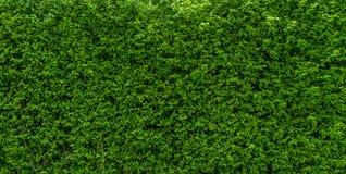 树墙壁绿色背景 免版税库存图片