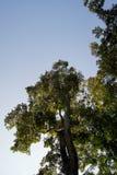 树增长和两在路一边 图库摄影