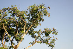树增长和两在路一边 库存照片