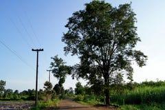 树增长和两在路一边 免版税库存照片