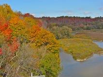 树增长密集沿河 免版税图库摄影