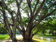 树大分支与叶子的在劈裂的绿草 免版税库存图片
