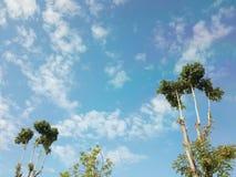 树天空和云彩 免版税图库摄影