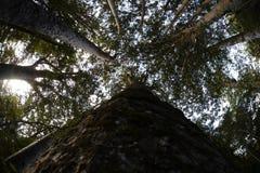 树天空 免版税库存照片