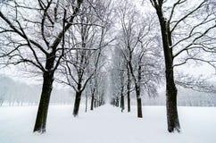 树对准线在Vigeland公园在奥斯陆 积雪 启发设计 库存照片