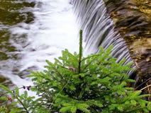 水树对生活。 免版税图库摄影
