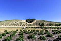 树小灌木林形成在风景小山的心脏形状 免版税库存照片