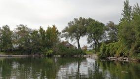 树岩石和lilly垫在一个海湾沿圣劳伦斯河 库存图片
