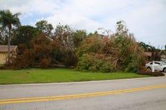 树崩溃了飓风厄马 库存照片