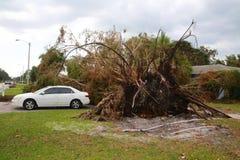 树崩溃了飓风厄马 免版税库存照片