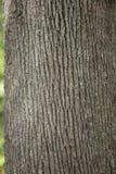 树干作为自然本底的细节纹理 免版税图库摄影