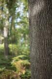 树干作为自然本底的细节纹理 免版税库存照片