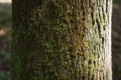 树干作为自然本底的细节纹理 图库摄影