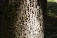 树干作为自然本底的细节纹理 库存图片