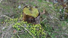 树干和下来和草 库存图片