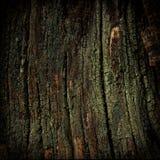 树干和地衣 库存图片