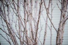 树干和肢体在冬天 库存图片
