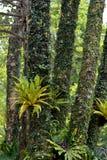 树干和蕨草在森林里 免版税库存照片