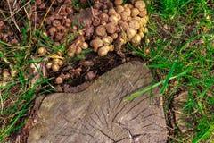 树干和蘑菇 库存图片