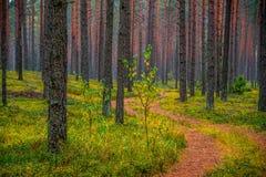 树干和道路森林背景  免版税库存照片